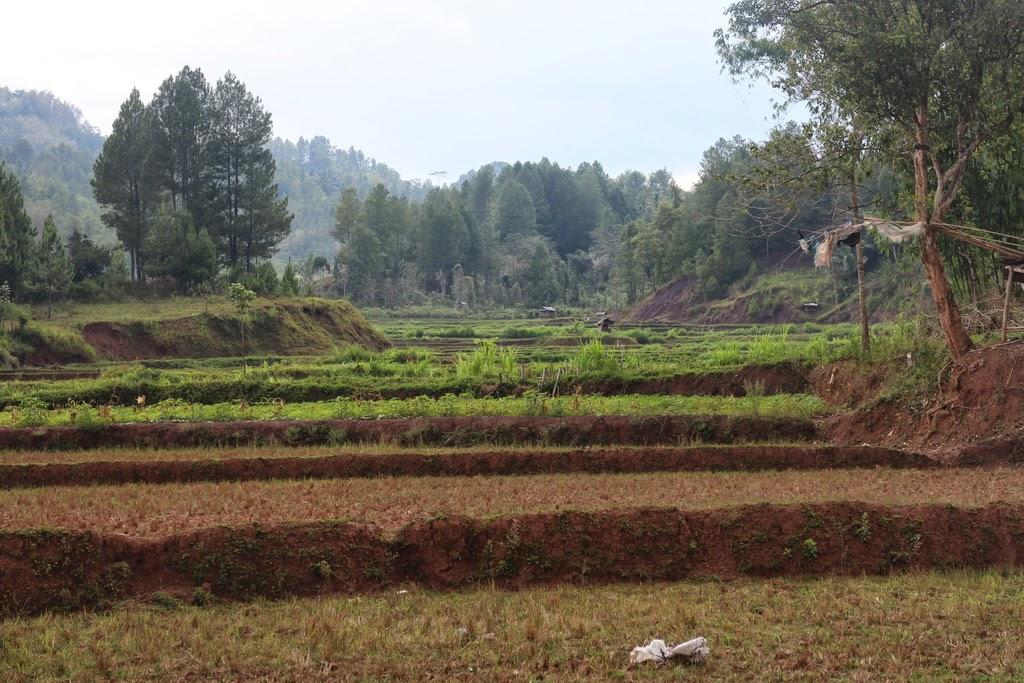 Complexes, fonctions, ensembles, argument, droites, terminale, Toraja, Sulawesi