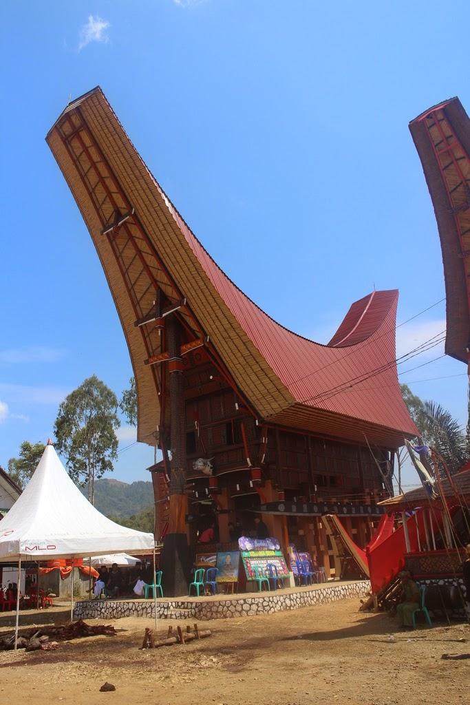 Probas, suites, conditionnelle, arbre, géométrique, terminale, Toraja, Sulawesi